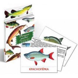 Речные рыбы. Дидактические карточки для ознакомления с окружающим миром