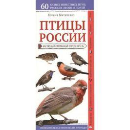 Митителло К. Птицы России. Наглядный карманный определитель