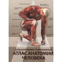 Спектор А. Большой иллюстрированный атлас анатомии человека