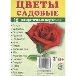 Цветы садовые (16 раздаточных карточек)