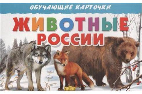 Богуславская М. (худ.) Обучающие карточки. Животные России Прочая обучающая литература